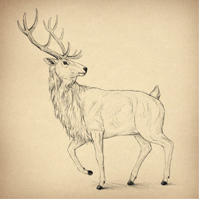 400x400 How To Draw A Deer Step By Step