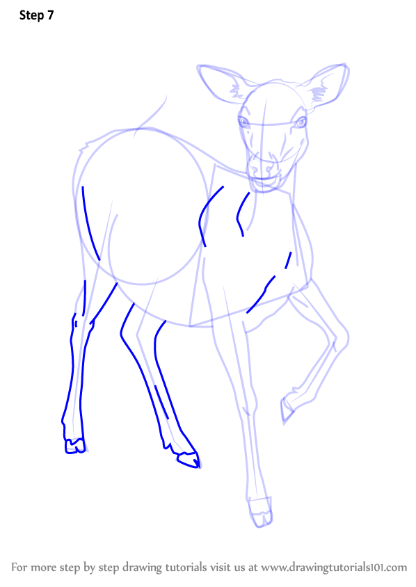 598x844 Learn How To Draw A Baby Deer (Zoo Animals) Step By Step Drawing