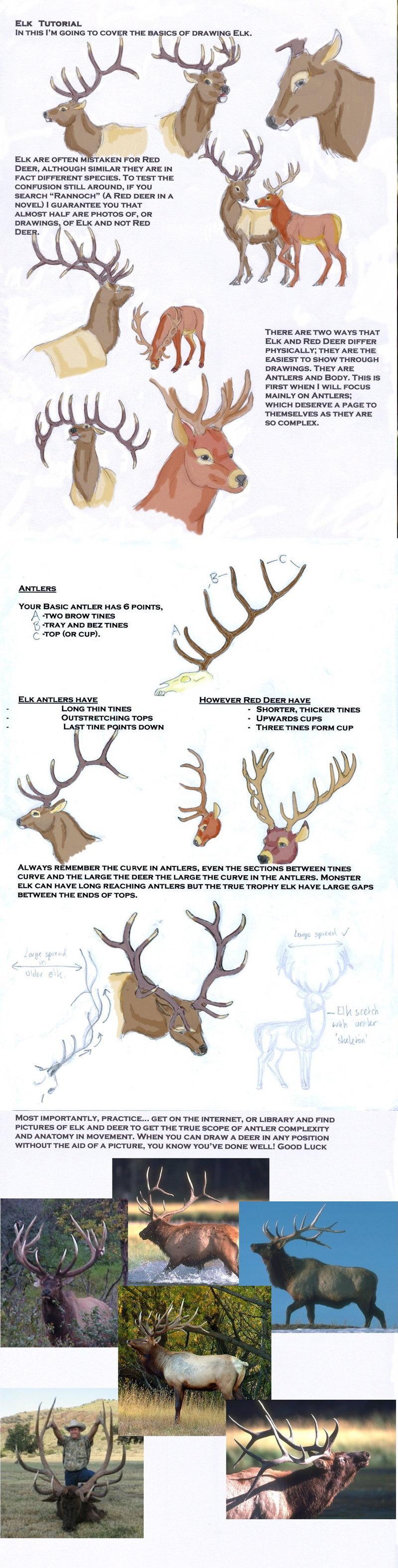 800x3151 Elk Tutorial By Leedassin