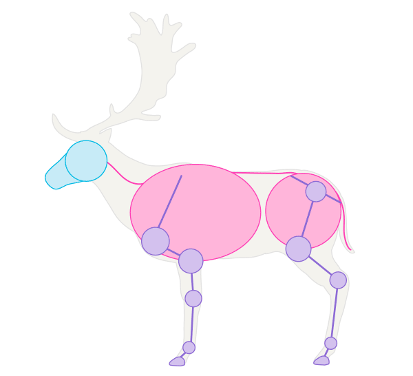 600x546 How To Draw Animals Deer