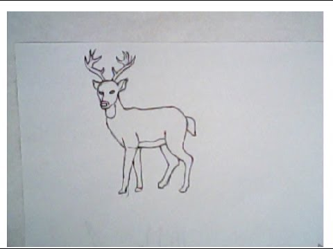 480x360 How To Draw A Deer (Simple Drawing, Tutorial)