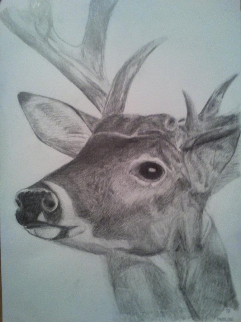 Deer Head Drawing At Getdrawings Com Free For Personal