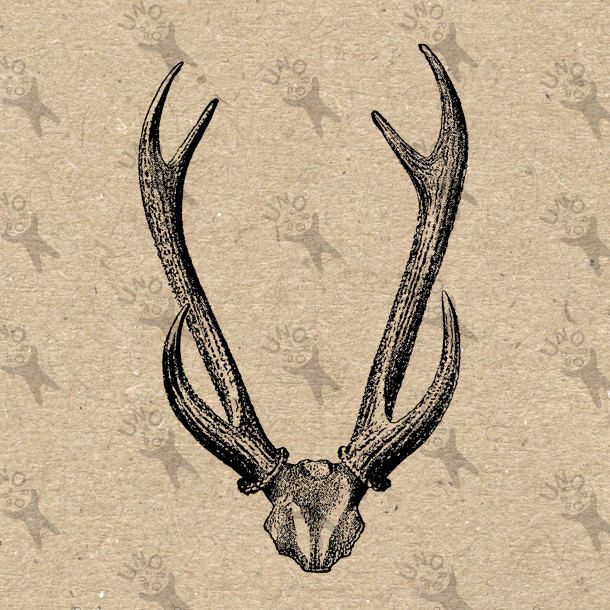 610x610 Vintage Retro Drawing Image Deer Horns Antlers Instant Download