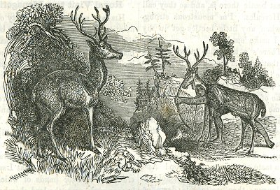 400x272 Robert Merry's Museum Deer Hunting (1850)