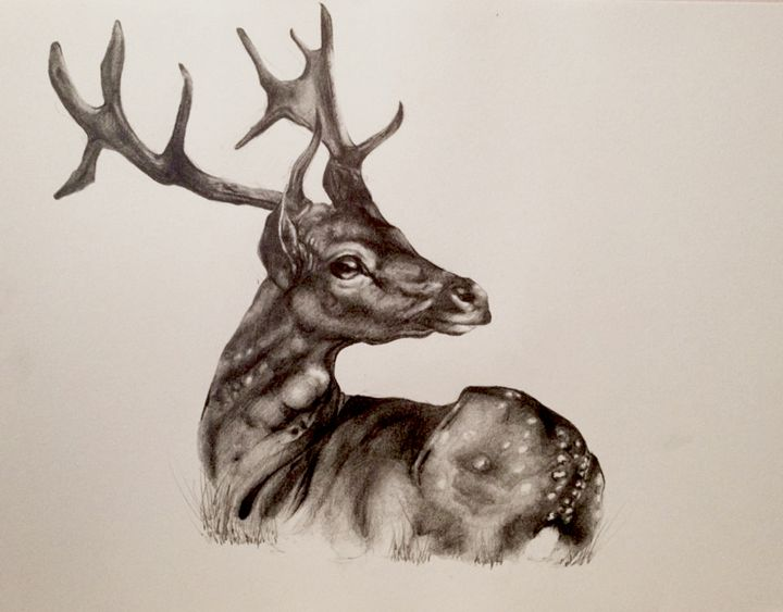 Deer Pencil Drawing at GetDrawings.com | Free for personal use Deer ...