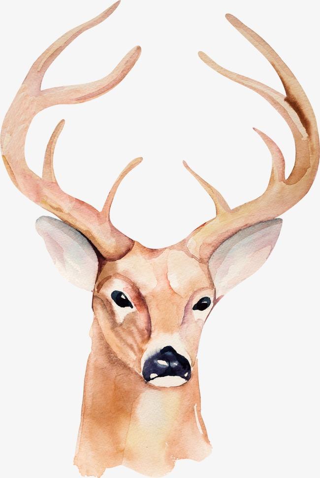 650x970 Antlers, Deer, Drawing Antlers, Hand Painted Deer Png Image