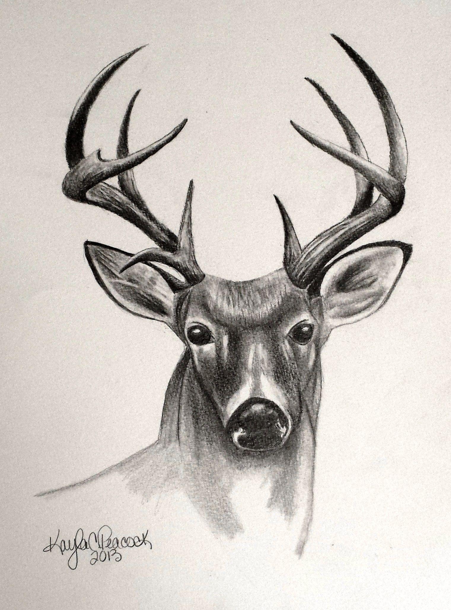 1521x2059 Deer Sketches