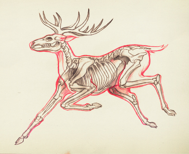 Deer Skeleton Drawing at GetDrawings.com | Free for personal use ...