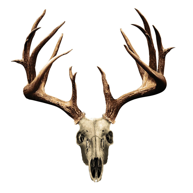 1500x1500 Deer Skull Drawing Clipart Panda