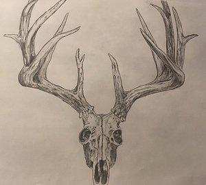 300x270 Deer Skull Drawings Fine Art America