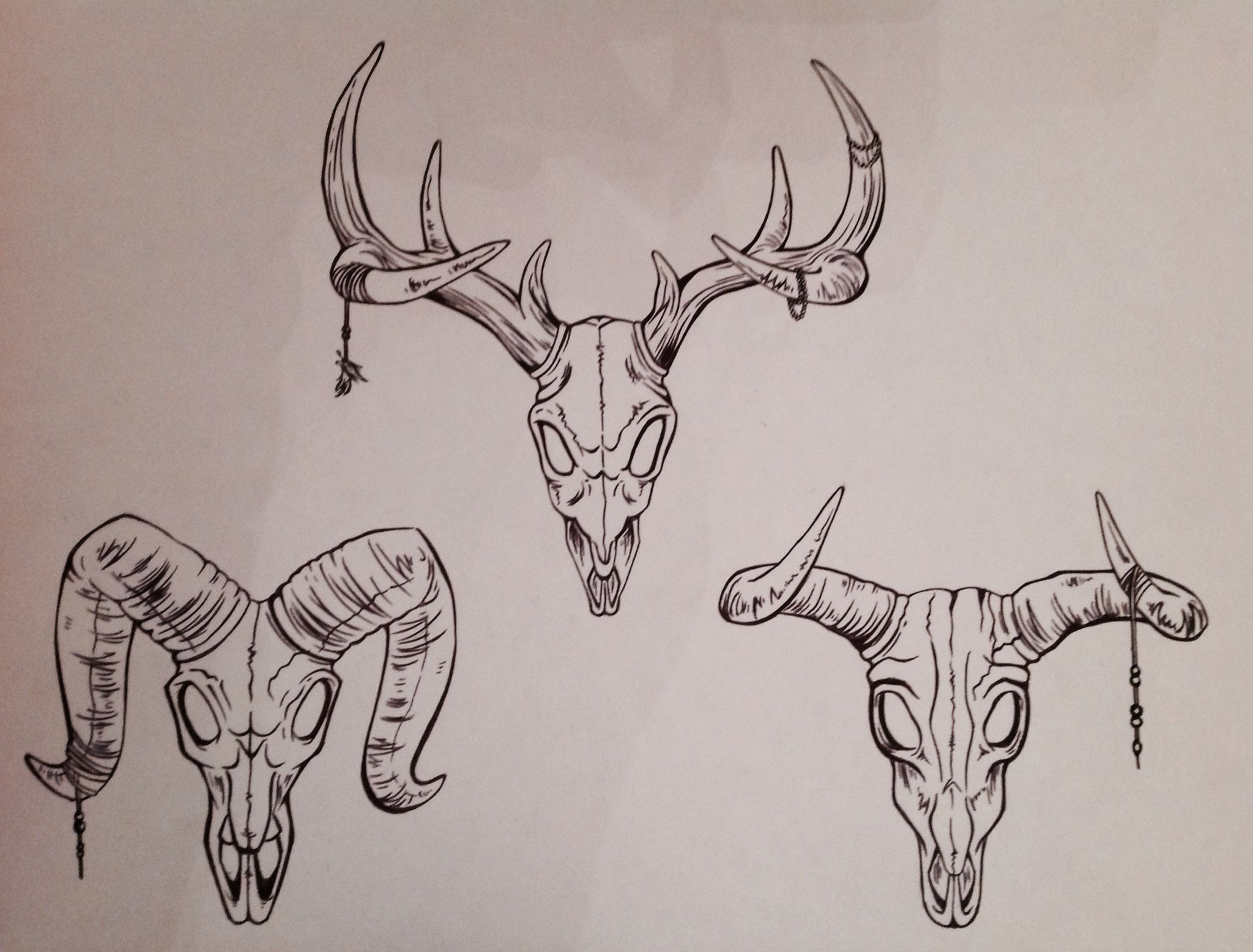 2048x1556 Biro Drawings Sheep Skull Cow Skull Deer Skull Inks