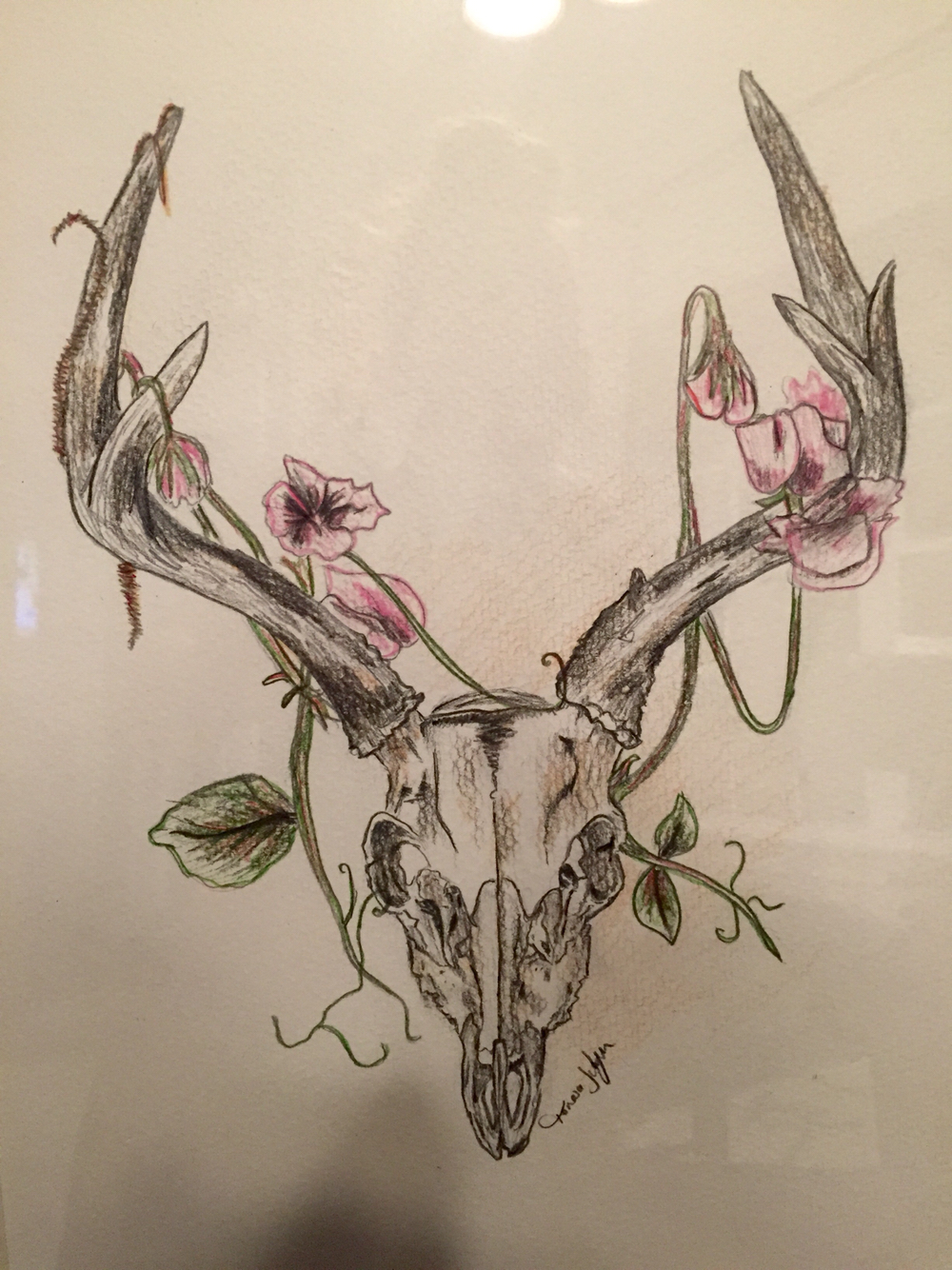 1000x1334 Deer Skull Drawing My Homemade Projects Deer Skull