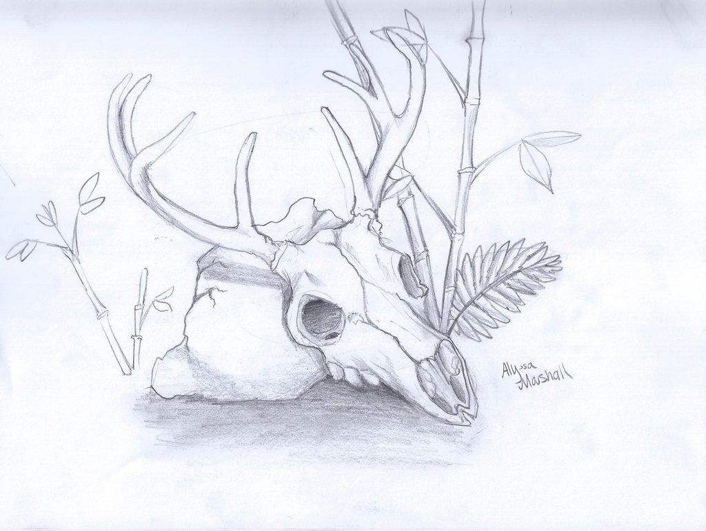 1024x771 Deer Skull By Moonsoul333
