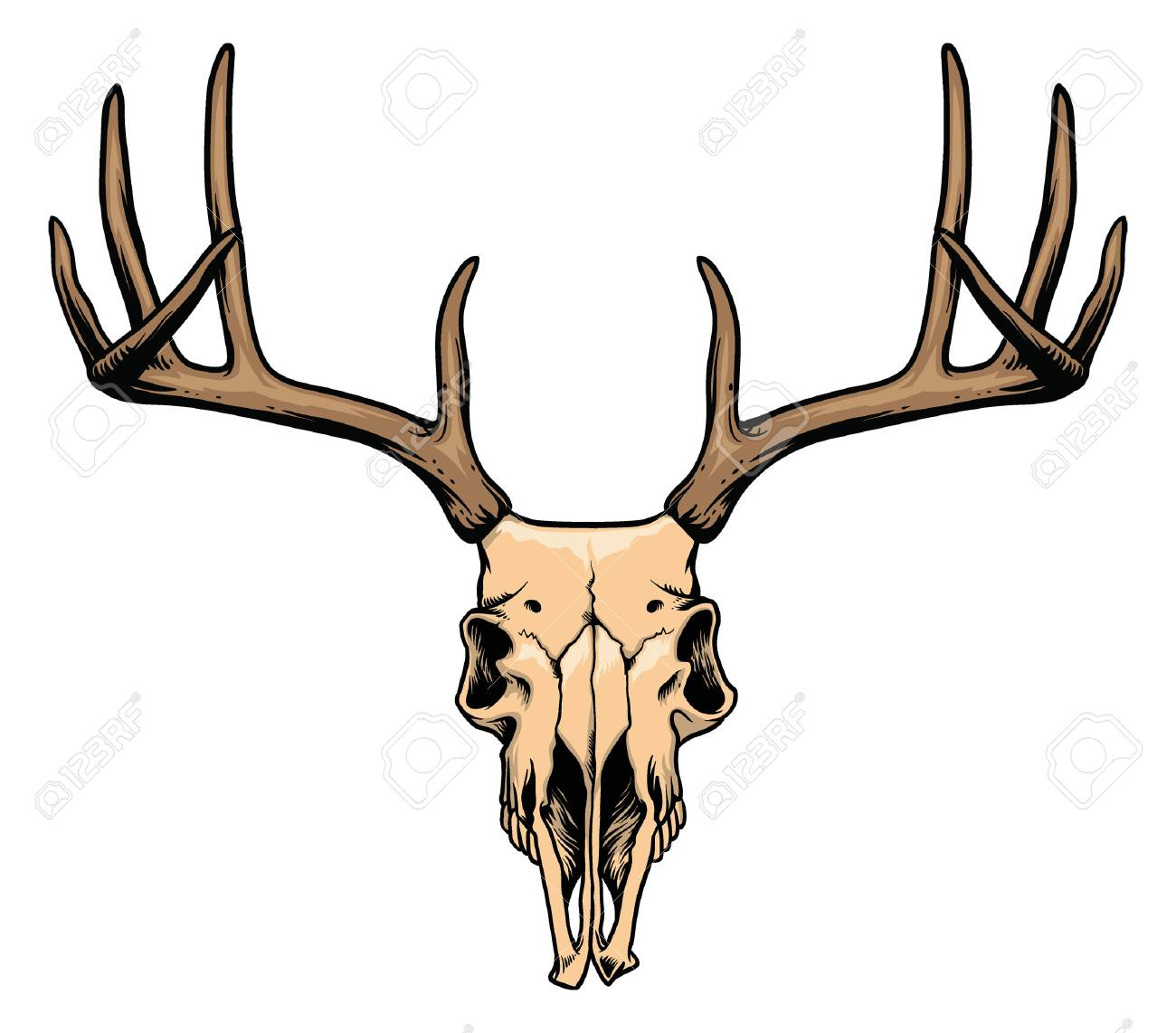1300x1142 Hand Drawing Of Deer Skull Royalty Free Cliparts, Vectors,