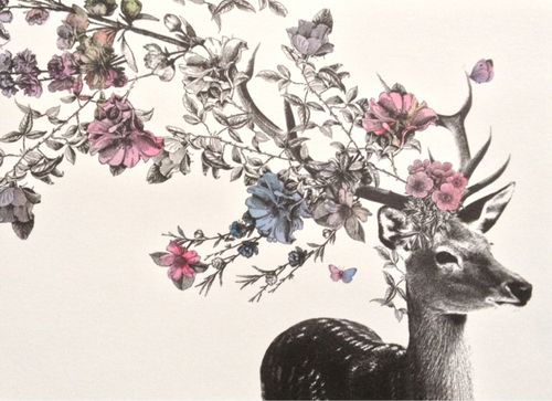 500x363 19 Best Dear Deer Images On Deer, To Draw And Antlers