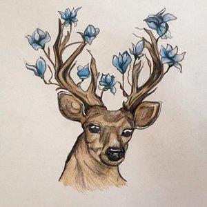 300x300 Deer Antlers Drawings
