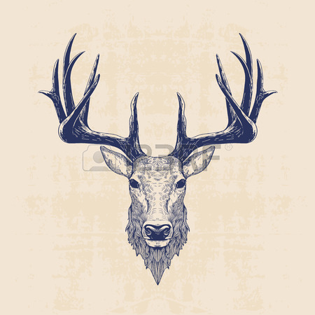 450x450 Deer Antlers Stock Photos. Royalty Free Business Images