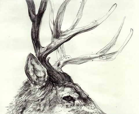 480x396 Image Result For Drawing Deer Antlers Reference Photos