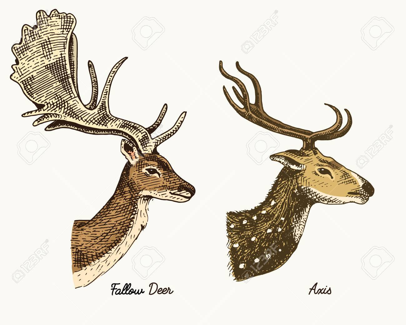 1300x1040 Roe Deer Or Doe, Axis Or Indian Dotted Vector Hand Drawn