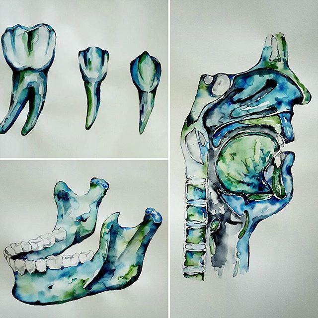 640x640 Watercolour Anatomy Art Dental Teeth Jaw Chiro Life