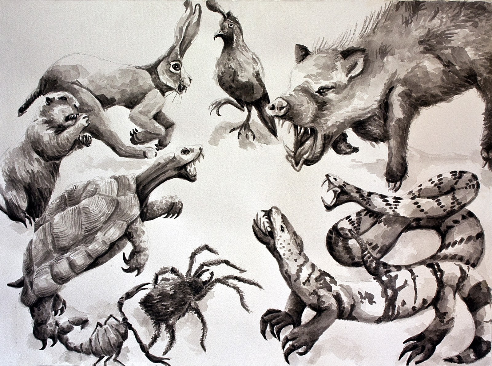 Line Drawing Of Desert Animals : Desert animals drawing at getdrawings.com free for personal use