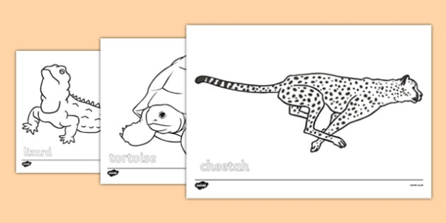 630x315 Desert Animals Colouring Sheets
