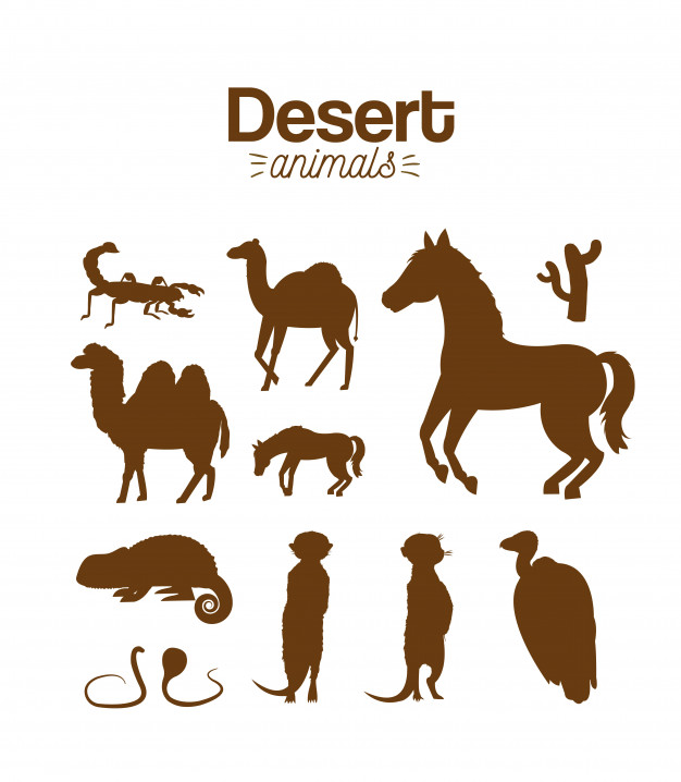 626x718 Desert Animals Hand Drawing Cartoon Vector Premium Download