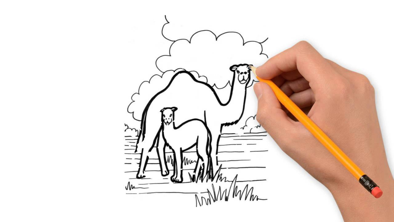 1280x720 Camel Animals Pencil To Draw Step By Step
