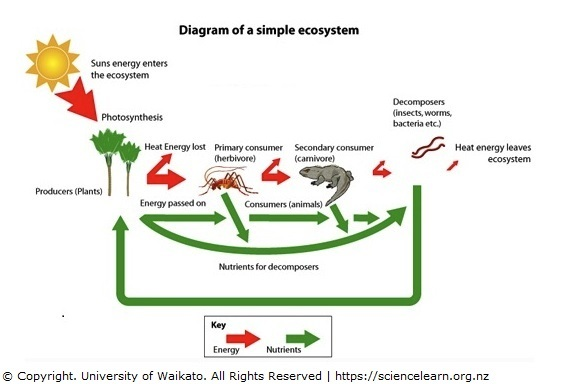 567x384 simple ecosystem diagram science learning hub
