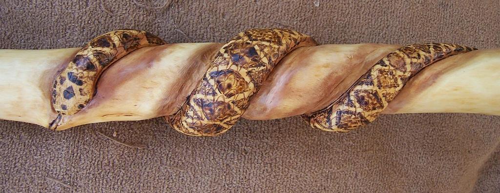 1024x396 Western Diamondback Rattlesnake Western Diamondback