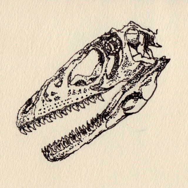 640x641 Dinosaur Bones Sketch Drawing Pen Ink Dinosaurus