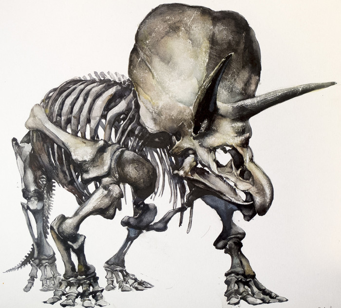 700x633 Triceratops Skelton Dinosaur Bones