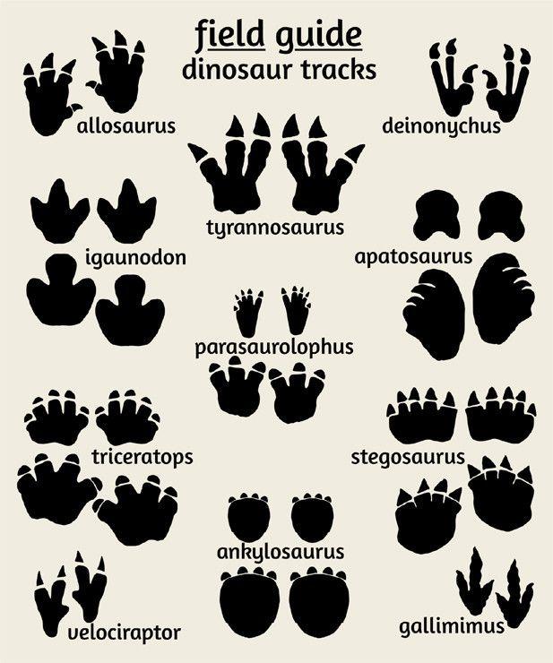 617x740 Dinosaur Tracks Poster, Field Guide Series Footprints, Printing
