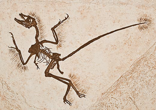 520x367 Archeopteryx Creature Reference Dinosaur Fossils