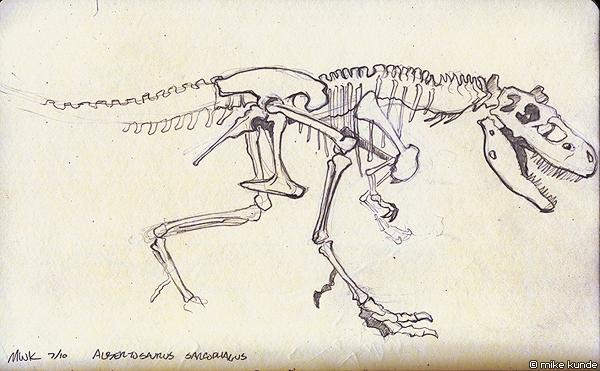 600x371 Dinosaur Fossil Sketch 2 By Allosaurilium