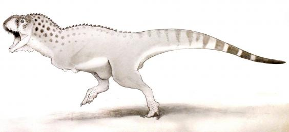 564x258 Last African Dinosaur's Bones Discovered In Morocco The Independent