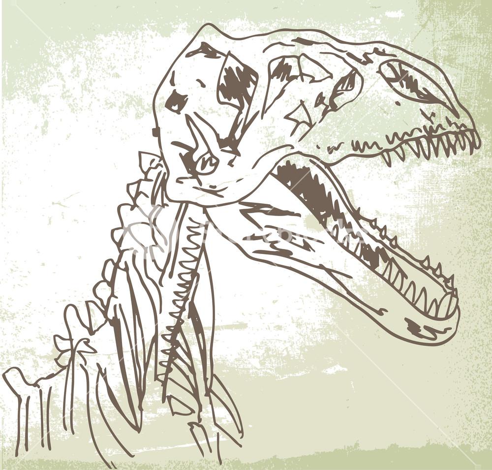 1000x955 Sketch Of Dinosaur Fossil. Vector Illustration Royalty Free Stock