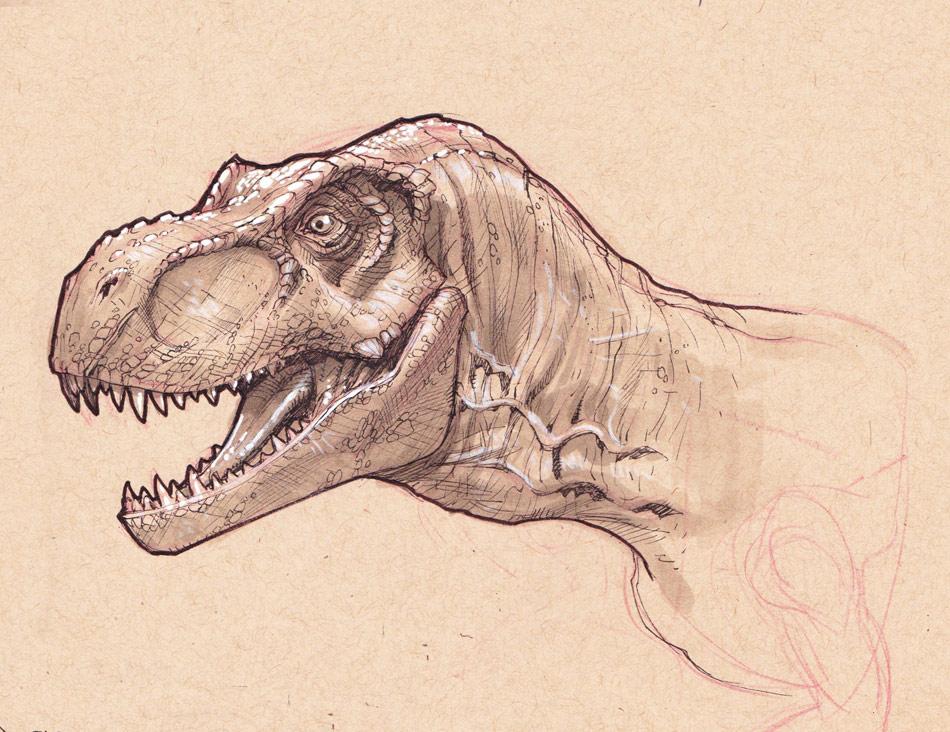 950x732 T Rex Head Study By Stephaneroux