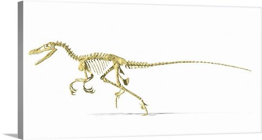 540x290 3d Rendering Of A Velociraptor Dinosaur Skeleton, Side View Wall