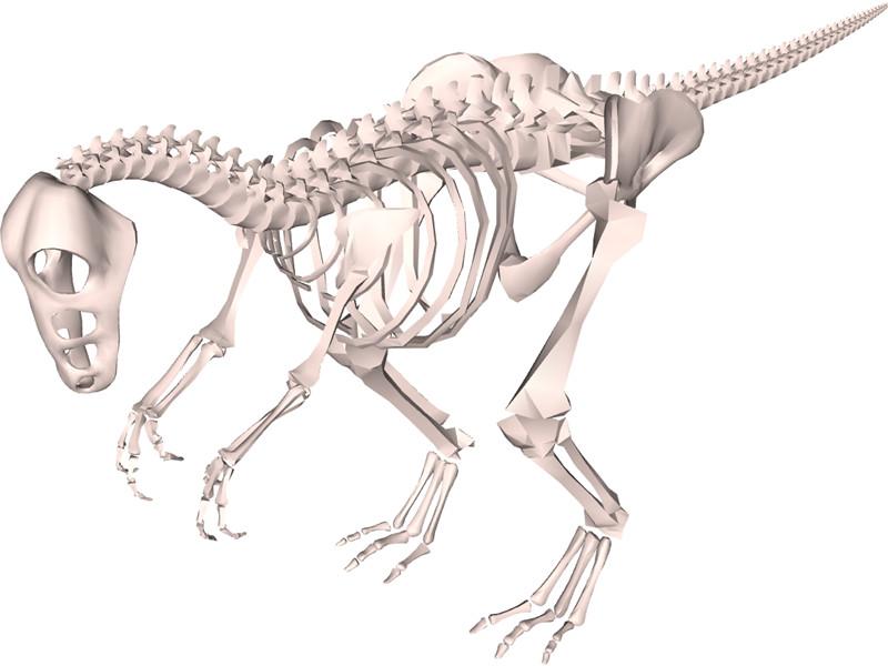 800x600 Dinosaur Skeleton 3d Model