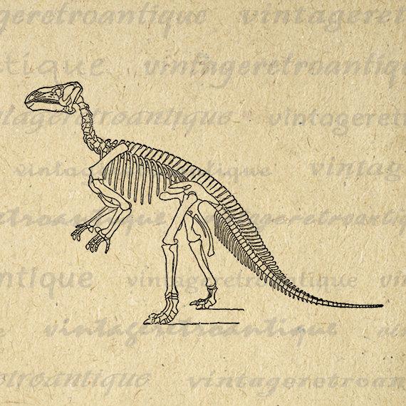 570x570 Printable Graphic Dinosaur Skeleton Download Image Digital