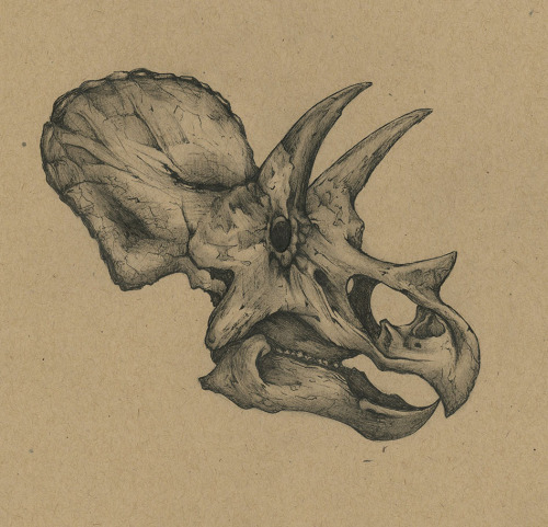 500x481 Paleo Study Of A Triceratops Skull. Tattoos