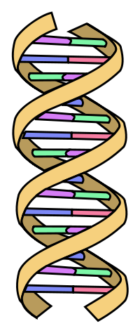 200x474 Sciblogs How To Spot A Badly Drawn Dna Helix