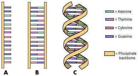 460x254 DNA Amp Genetics AEUR Evolution Is Not The Answer