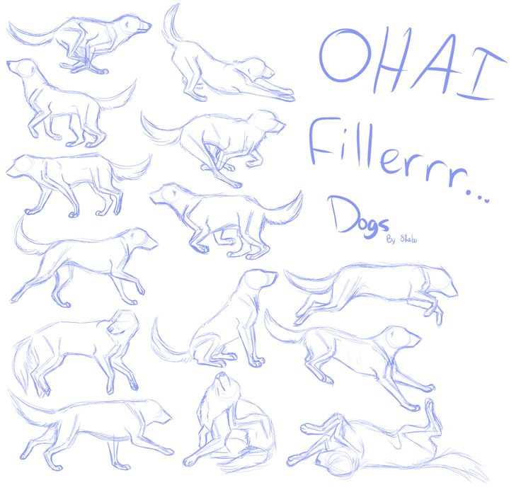 Dog Anatomy Drawing at GetDrawings.com | Free for personal use Dog ...
