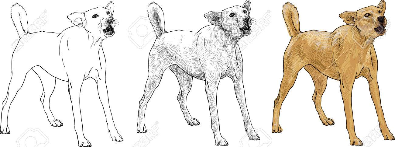 1300x483 The Dog Is Barking Like Seeing A Stranger Royalty Free Cliparts