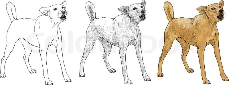 800x298 The Dog Is Barking Like Seeing A Stranger Stock Vector Colourbox