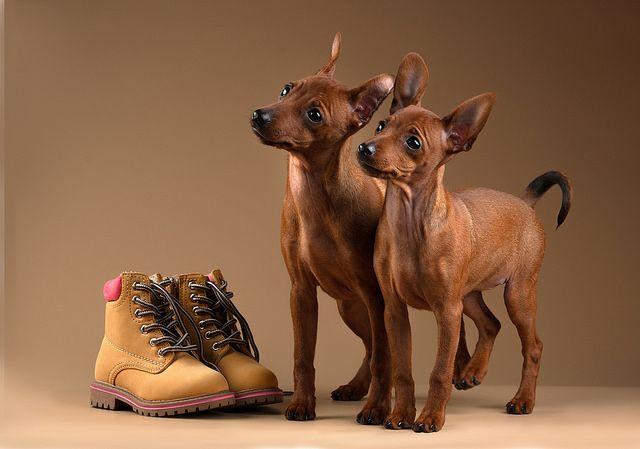 640x449 Dog Barking Dog, Animal And Dog Barking
