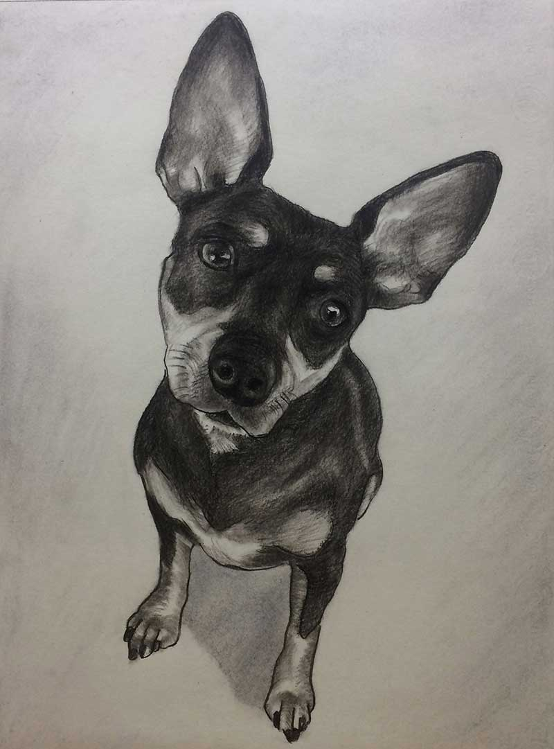 800x1081 Charcoal Pet Portraits Pet Drawings In Charcoal