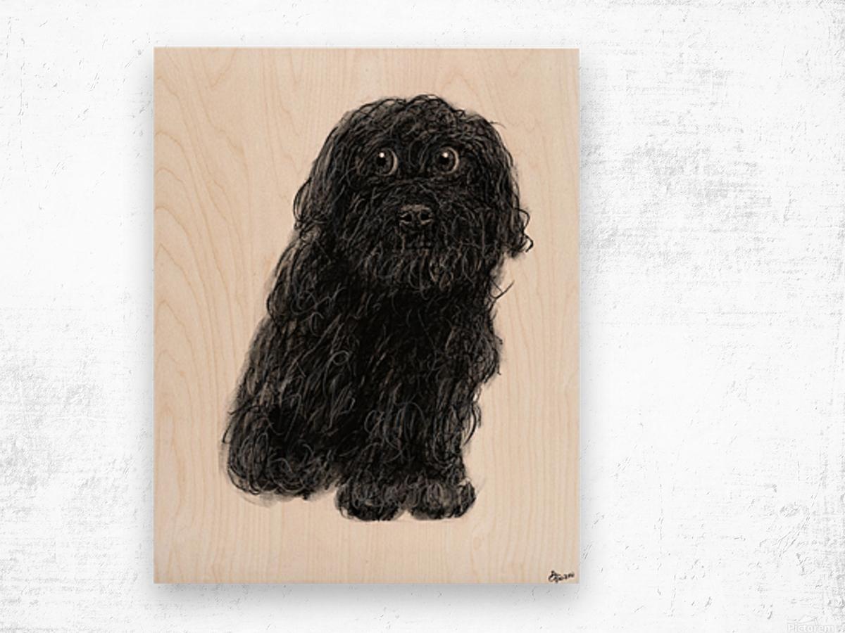 1200x900 Charlie The Dog